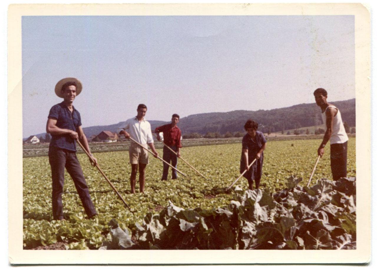 Beerstecher AG Hacken mit Land