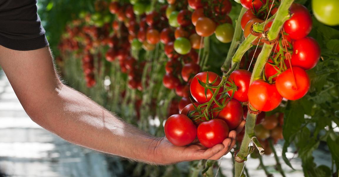Beerstecher AG Gemüseanbau
