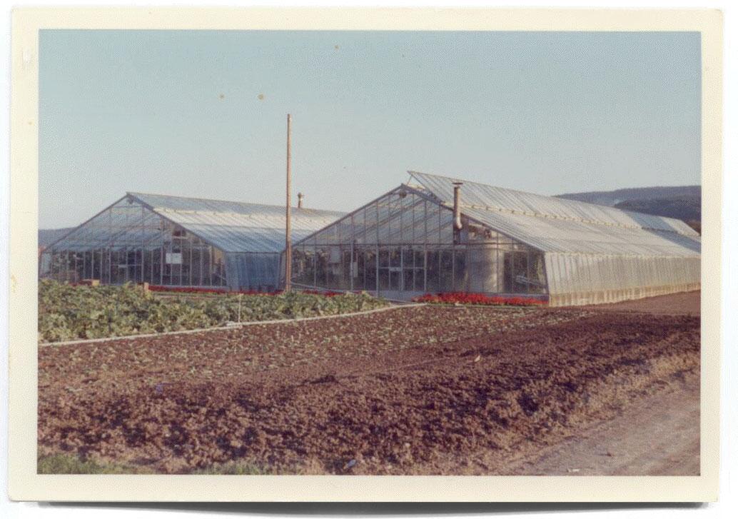Beerstecher Ersten Gewächshäuser 1959