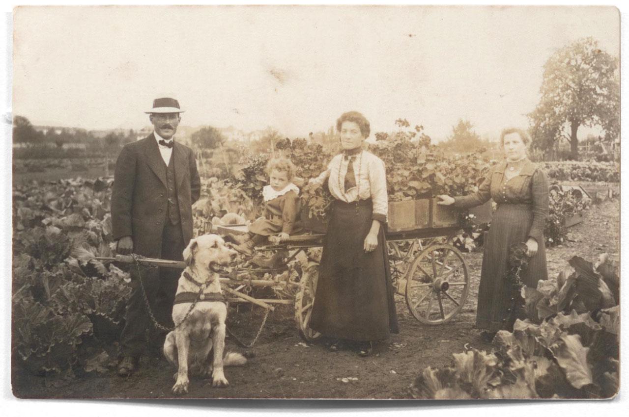 Beerstecher AG 1914 Hunde- statt Pfärdestärken